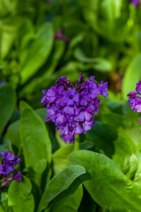 15 Best Shade-Loving Plants - Flowers That Grow and Thrive