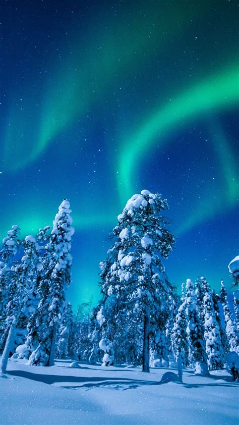 Wallpaper Forest, Winter, Frosted trees, Aurora Borealis