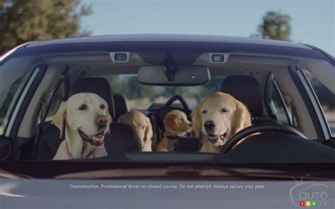 Subaru's Driving Dogs Returning in New Ads   Car News