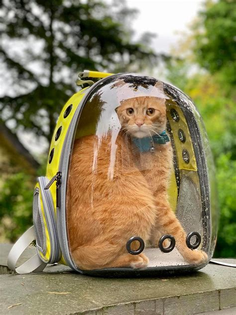 Lollimeow BUBBLE BACKPACK - Awesome Bag for your adventure
