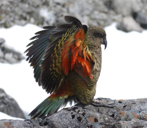 Exotic Birds flying across the world … on the 'wings' of