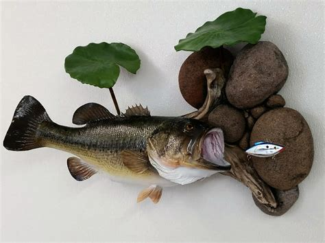 Large Mouth Bass Skin Mount – Taxidermy Insider